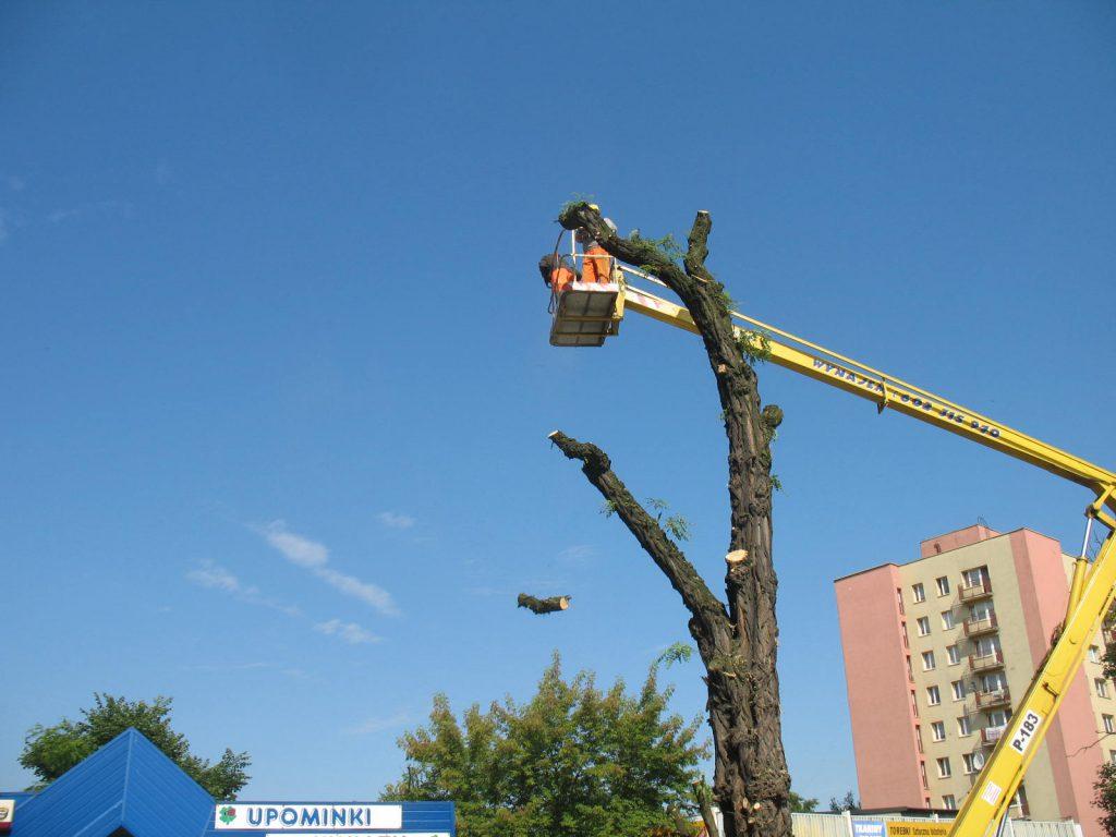 Wycinka drzew metodą alpinistyczną 19