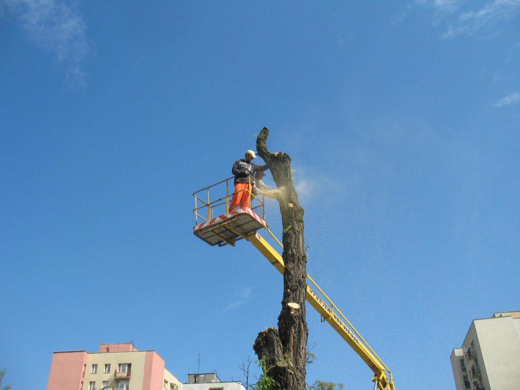 Wycinka drzew metodą alpinistyczną 17