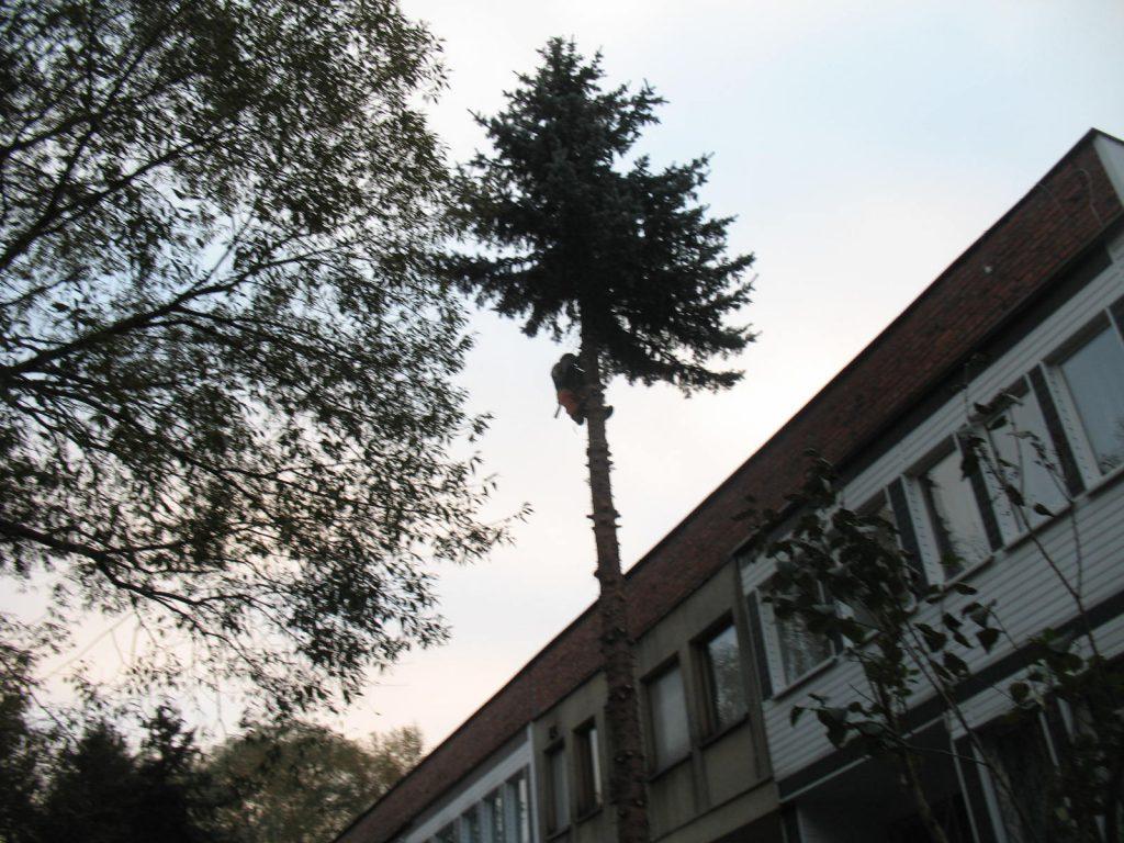 Wycinanie drzew metodą alpinistyczną Katowice