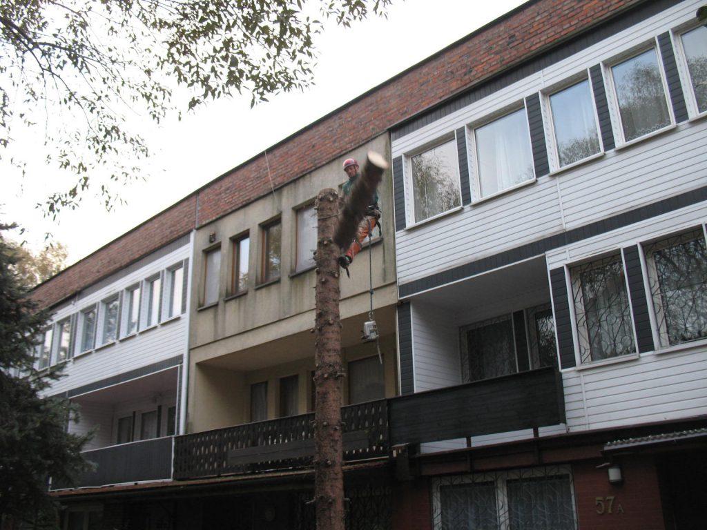 Wycinka drzew metodą alpinistyczną 2