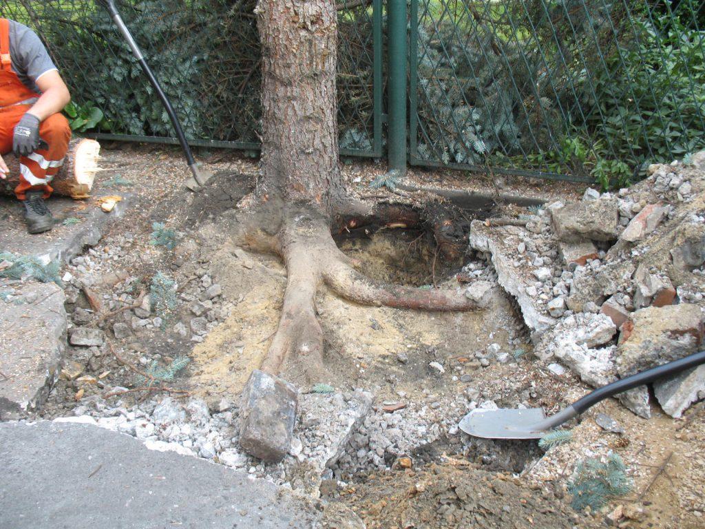Usuwanie drzew 3