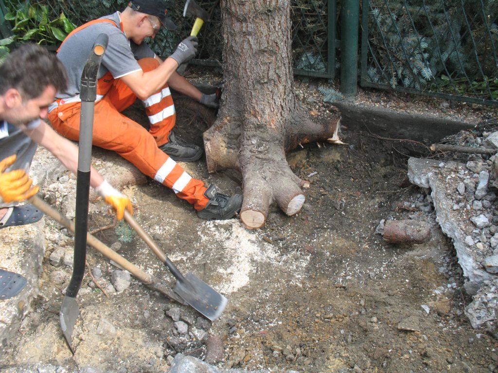 Usuwanie drzew 2
