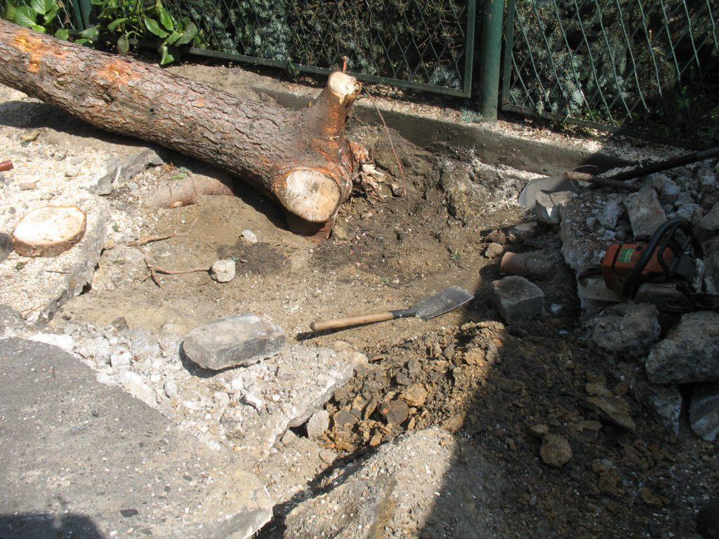 Usuwanie drzew